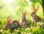 Rabbits. Art Design of Cute Little Easter Bunnies in the Meadow — Stock Photo