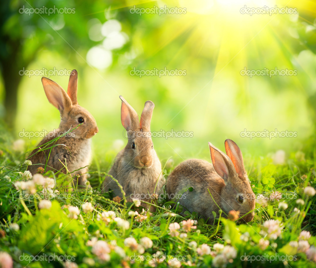 Rabbits. Art Design Of Cute Little Easter Bunnies In The