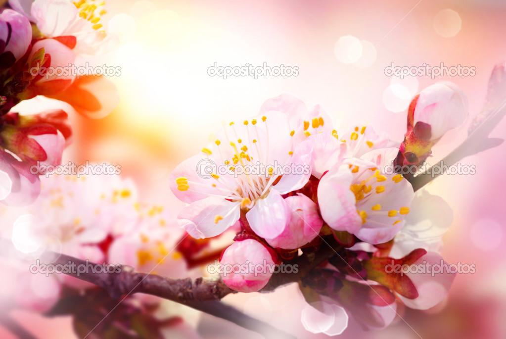 fleur de printemps fleurs abricots photographie subbotina 29985233. Black Bedroom Furniture Sets. Home Design Ideas