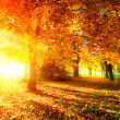 Fall. Autumnal Park. Autumn Trees and Leaves in Sunlight Rays  — Foto Stock