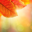Autumn Background. Beautiful Colorful Leaves and Sunlight — Stok fotoğraf