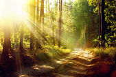 Beautiful Scene Misty Old Forest with Sun Rays, Shadows and Fog — Stock Photo