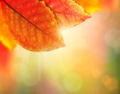 Autumn Background. Beautiful Colorful Leaves and Sunlight — Stock Photo