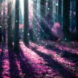 Fantasy Landscape. Mysterious Old Forest — Foto Stock