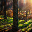 Misty Old Forest. Autumn Woods — Stockfoto