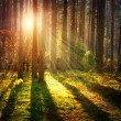 Misty Old Forest. Autumn Woods — Stock Photo