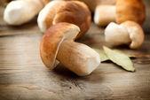 Mushroom Boletus over Wooden Background. Autumn Cep Mushrooms — Stock Photo