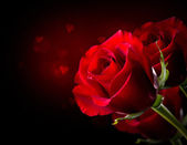 Red Rose Flower isolated on Black. St. Valentine's Day — Stock Photo