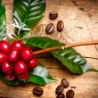 Coffee Plant. Red coffee beans on a branch of coffee tree — Stok fotoğraf #44268575