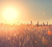 Field. Rural Landscape under Shining Sunlight — Stock Photo