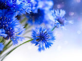 Wild Blue Cornflowers. — Stock Photo