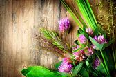 Spring Herbs — Stock Photo