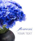 Wild blue Cornflowers. — Stock Photo