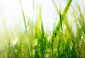 Fresh green grass with dew drops — Stock Photo