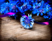 Wild Blue Cornflowers — Stock Photo