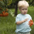 Baby with mountain ash berries - Stock Photo