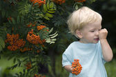 Baby with mountain ash berries — Stock Photo