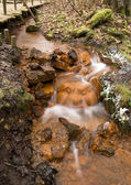 Stream in Latvia. Eastern Europe — Stock Photo