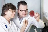 Laboratory assistants study petri — Stock Photo