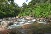 Creek in Brazil — Stock Photo