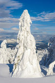 Lonely snow-covered fir tree in winter mountains on a sunny day — Stock Photo
