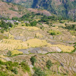 Typical mountain Agricultural landscape of Nepal — Stock Photo #22218963