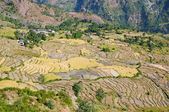 Typical mountain Agricultural landscape of Nepal — Stock Photo