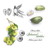 Watercolor botanical sketches — Stock Photo