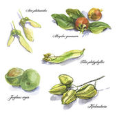 Watercolor botanical sketches — Stockfoto