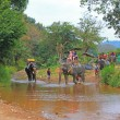 Elephant trekking, Thailand — Stock Photo #20249989