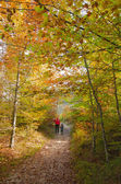 Hiking Autumn forest — Stock Photo