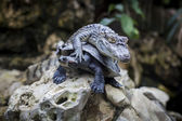 Crocodile on turtle — Stock fotografie