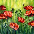 Red poppies, color pencil drawing — Stock Photo