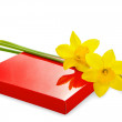 Narcissus and gift box on white — Stock Photo