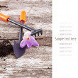 Garden tools (shovel, rake ) and crocus on old wooden background — Stock Photo