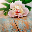 Pink peony on old wooden background — Stock Photo