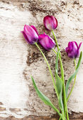 Purple tulips over shabby white wooden table — Stock Photo