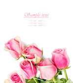Pink roses on white background — Stock Photo