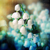 Lily of the valey,grunge floral background — Stock Photo