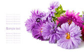 Aster Flowers Bouquet — Stock Photo