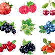 Stock Vector: Berries photo-realistic set