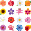 Colorful flowers photo-realistic set — Stock Vector #26079185