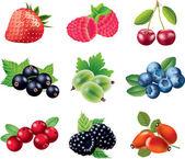 Berries photo-realistic set — Stock Vector