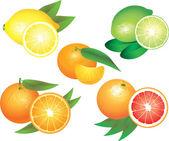 Citrus fruits photo-realistic set — Stock Vector
