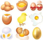 Eggs photo-realistic set — Stock Vector