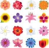 Colorful flowers photo-realistic set — Stock Vector