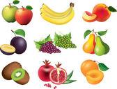 Fruits photo-realistic set — Stock Vector
