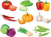 Vegetables photo-realistic set — Stock Vector