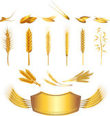 Wheat photo-realistic set — Stock Vector