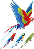 Macaw parrot spread wings and tree sitting Aras — Stock Vector